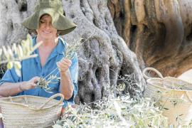 Infusiones de olivo