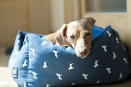 Por qué tu perro araña su cama antes de dormir