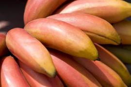 Así es el plátano rojo con sabor a frambuesa originario de Ecuador