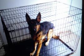 La policía pone fin al maltrato de un perro encerrado en una jaula