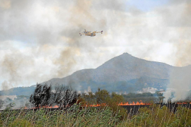 Los primeros indicios apuntan a que el incendio de s'Albufera fue intencionado