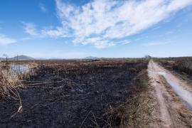 El incendio de s'Albufera, extinguido