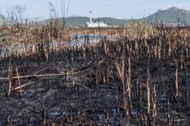 incendio de S'Albufera de Mallorca