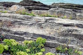 El 'fonoll marí' fresco