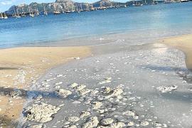 Los vecinos del Port de Pollença abren una «caja de resistencia» contra los vertidos fecales