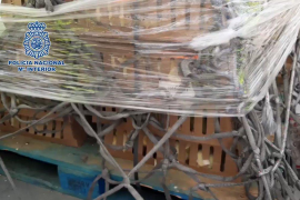 Mueren 20.000 pollitos abandonados en Barajas