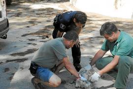 Rescate de un cabrito en Andratx