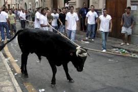 Un activista se ofrece para ser ensogado en lugar de un toro en Fornalutx