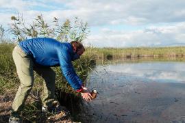 Liberan ocho ejemplares de malvasía cabeciblanca 15 años después de su extinción