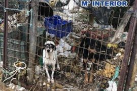 Valencia triplicará el importe de las multas por maltrato y abandono de mascotas