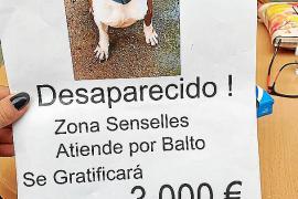 Ofrecen una recompensa de 3.000 € por un perro extraviado en Sencelles