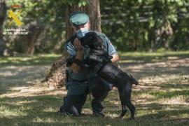 La Guardia Civil pide inhabilitar a una mujer para tener animales