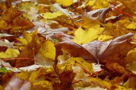 El otoño llegará a las 16.49 horas de  hoy y durará 89 días y 20 horas