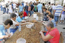La primera Mostra de l'Ametla rinde tributo al cultivo de este fruto seco en el municipio