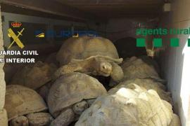 Desarticulada una red que traficaba con 300 especies de reptiles protegidos