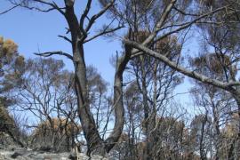 Un operario forestal confiesa ser autor de 13 incendios en Menorca y Mallorca