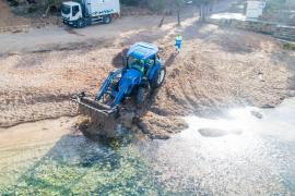 El retorno de los restos de posidonia a las playas de Sant Antoni, en imágenes