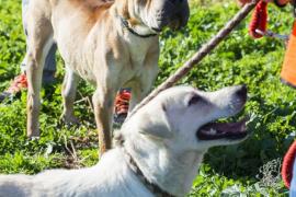 Desciende el número de perros que llega a Son Reus