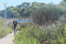 El Ajuntament adecentará un tramo del Passeig Calvià pese a no ser una tarea de su competencia