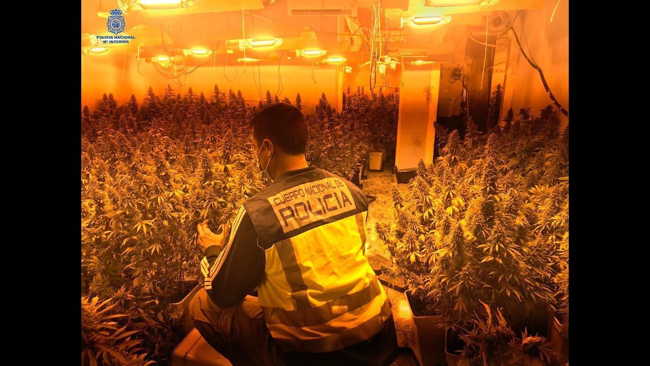 Desarticulado el clan del 'Julillo', suministrador de marihuana a narcotraficantes de Palma