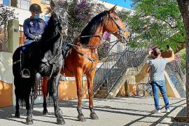 La Policía Montada de Palma también se suma a la vigilancia en los colegios