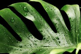 Nueve plantas de interior capaces de sobrevivir a los cuidados de las manos menos hábiles