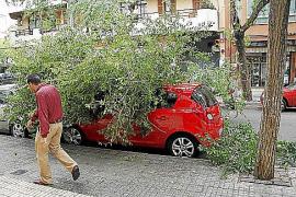 El viento tumba varios árboles en Palma