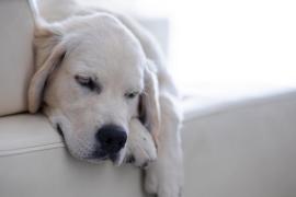 Trucos infalibles para eliminar los pelos de mascotas en casa rápidamente