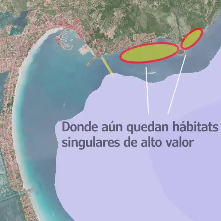 Ecologistas advierten de la pérdida de calidad del mar en la bahía de Alcúdia
