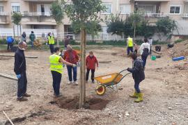 Los vecinos de Son Dameto siembran 18 árboles