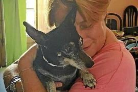 Proyecto Abuelos Mallorca: perros ancianos buscan un hogar