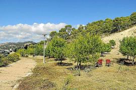 El Ajuntament inicia las tareas de limpieza de un tramo del paseo Calvià