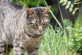 Colonias de gatos en Palma: ¿Cómo podemos ayudar?