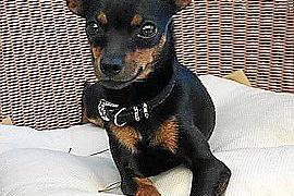 Ofrecen 500 euros por un perro 'rater' perdido cerca del aeropuerto