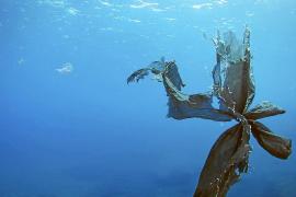 El vidrio y el plástico, la basura más frecuente en el mar de Baleares