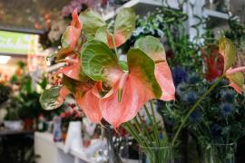 Las compras navideñas en el Mercat Nou de Ibiza, en imágenes (Fotos: Arguiñe Escandón).