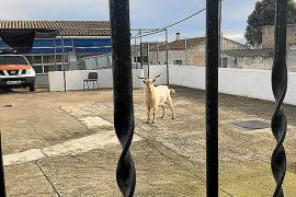 Los pueblos de Mallorca esquivan las inocentadas de los Quintos por el toque de queda