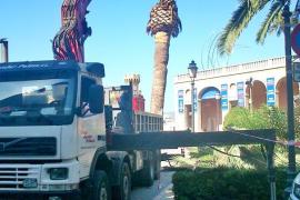 El índice de afectación del picudo rojo en las palmeras de Ciutat es «muy elevado»