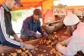 La burocracia será el principal escollo de los exportadores de patata ante el Brexit