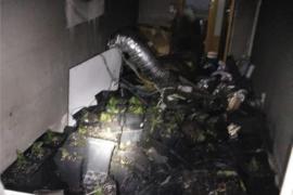 Un incendio en un piso de Son Cladera destapa una importante plantación de marihuana