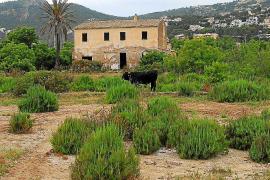 El alcalde de Andratx busca una solución a la degradación de Can Fasser