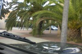 Denuncia palmeras