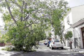 El viento derriba árboles, ramas y algunos letreros en calles de Palma