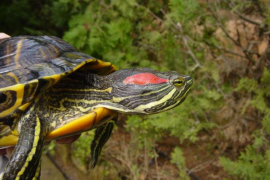 El Cofib se hizo cargo en 2020 de 253 animales exóticos, de los que un 45 % eran especies invasoras