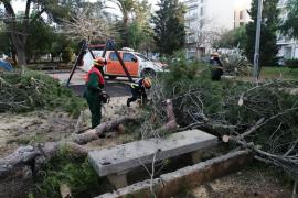 Mallorca se recupera de los daños de Hortense, que deja casi 400 incidencias