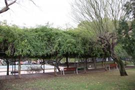 Reabren progresivamente los parques de Palma tras la alerta por el viento