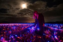 Introduce miles de luces LED en un campo de puerros holandés