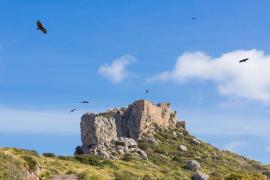 El Govern rebaja la protección en Ternelles para reabrir el acceso público a Cala Castell