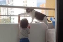 La preocupación de un gato que intenta evitar que un niño se encarame al balcón