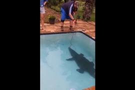 Descubren un cocodrilo de tres metros de longitud en el fondo de su piscina